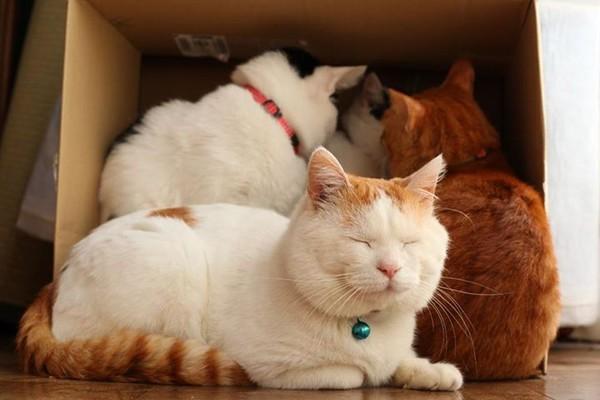 Mơ thấy mèo – Mơ thấy mèo có ý nghĩa như thế nào