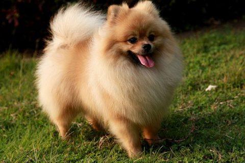 Giải đáp con số xổ số lô tô của giấc mơ thấy chó