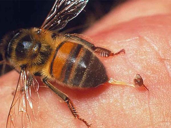 Mơ thấy ong đốt đánh đề con gì chắc ăn nhất