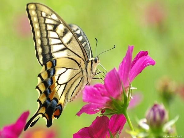 Chiêm bao thấy con bướm đánh ngay con xổ số nào