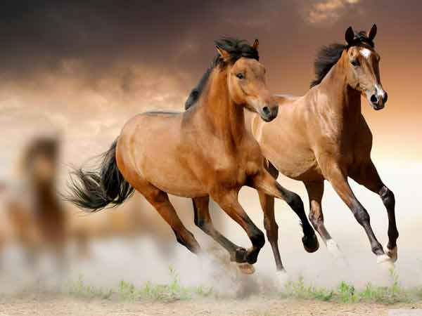 Mơ thấy con ngựa đánh đề con gì phất lên như diều gặp gió?