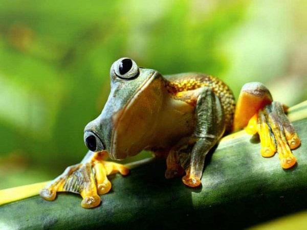 Nằm mơ thấy ếch là điềm báo gì? Nên đánh đề con bao nhiêu?