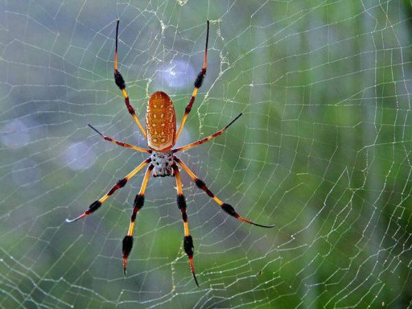 Mơ thấy nhện – Giải mã ý nghĩa giấc mơ thấy con nhện ?