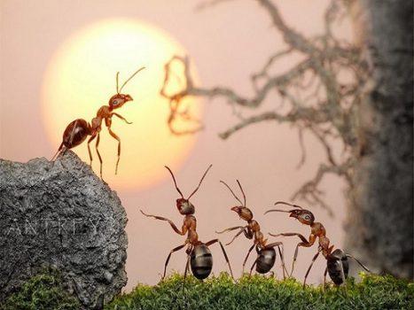 Mơ thấy kiến là điềm báo gì?
