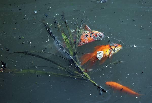 Giải mã giấc mơ thấy cá chết là điềm báo gì? đánh con số nào
