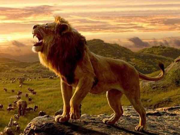 Ngủ mơ thấy sư tử đánh lô đề số mấy ? là điềm hung hay cát ?